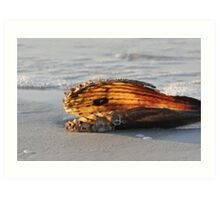Pen Shell Art Print