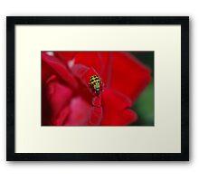 Beetle Buggie Framed Print