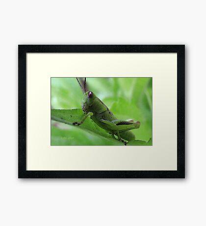 Green Chewing Machine Framed Print