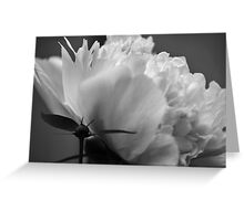 From Small Beginnings Come Great Things. Greeting Card