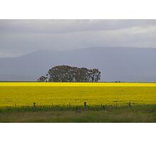 Canola -Grampians Region Photographic Print