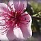 *Avatar/Fruit Blossom - Enchanted Flowers*