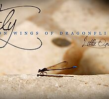 Fly On Wings of Dragonflies, Little One by Franchesca Cox