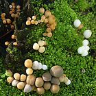 Mushrooms on Tree, Tuart Forest, Busselton WA by Leonie Mac Lean