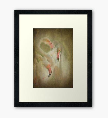 Flamingo's in Pastel Framed Print