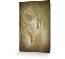 Flamingo's in Pastel Greeting Card