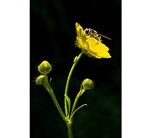 Bugs and Buttercups Photographic Print