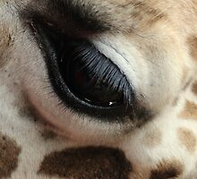 Out of Africa - Eyeliner, Surely Not! by Sally Haldane