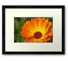 Sunny Marigold Framed Print