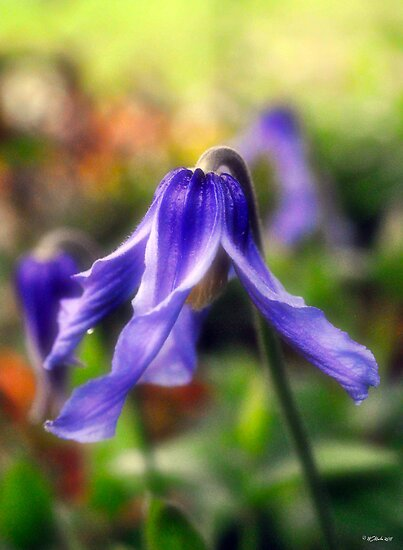 Purple Bells in the Garden by William Martin