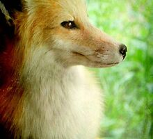 This is my best side!!!...White Tailed Fox © by Dawn M. Becker