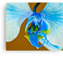 Blue Ribbon Macro Canvas Print
