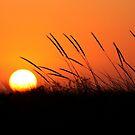Sunset 8188 by João Castro