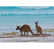Beach Roos - Lucky Bay - Cape Le Grande - WA Photographic Print