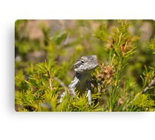 Perched Reptile Canvas Print