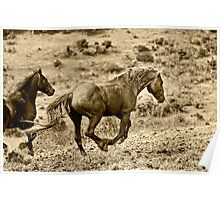 Wild Stallion Poster