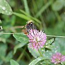 Busy Bee by dilouise