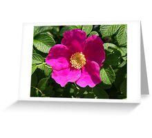 Beach Rose - Rosa Rugosa Greeting Card