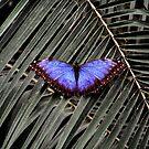Butterfly by LydiaBlonde