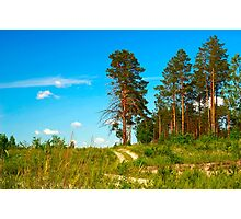 forest view Photographic Print