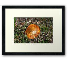 mushroom macro Framed Print
