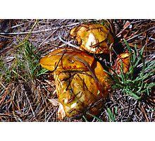 mushroom macro Photographic Print