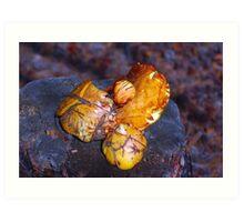 mushrooms on the stump macro Art Print