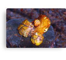 mushrooms on the stump macro Canvas Print