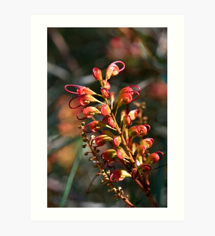 Bottle Brush Flower (1) Art Print