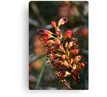 Bottle Brush Flower (1) Canvas Print
