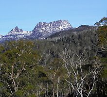 Cradle Mountain in the treas by Paul Campbell  Photography