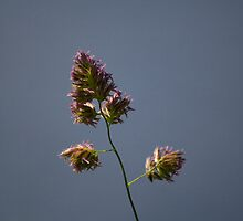 Grass Seed by stay-focussed