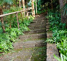Jungle Steps by phil decocco
