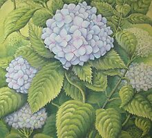 Hydrangeas at Lanhydrock, Cornwall by Fiona Cross
