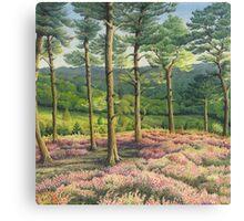 Evening Sun, Surrey Hills Pine Trees Canvas Print