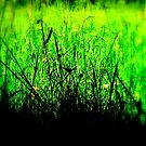Grass silouette by Livvy Young