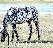 Canadiana Marker by Leslie van de Ligt