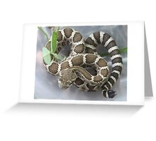 Baby Rattlesnake Greeting Card