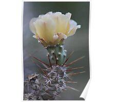 Cactus - Fraser River Poster