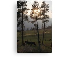 All's Quiet on the Ranch Canvas Print
