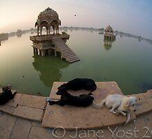 Dog Dawn by emjaynie