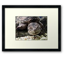 Swimming Snapper Framed Print