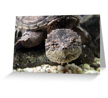 Swimming Snapper Greeting Card