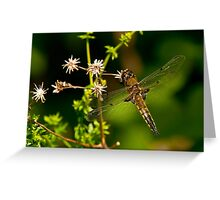 Four Spotted Skimmer Dragonfly Greeting Card