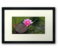 Water Lily © Framed Print