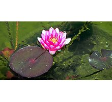Water Lily © Photographic Print