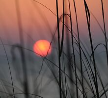 captiva sunset through the dunes by Jacki Campany