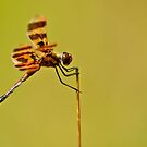 Halloween Pennant Dragonfly by Michael Cummings