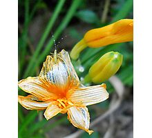 house guest Photographic Print