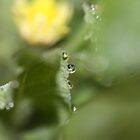 Dewdrops diamonds and Dandelions 3 by Barbara  Glover